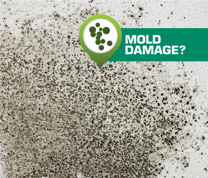 Mold Growth in Tracy