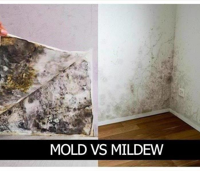 Mildew vs Mold: What is the Difference??