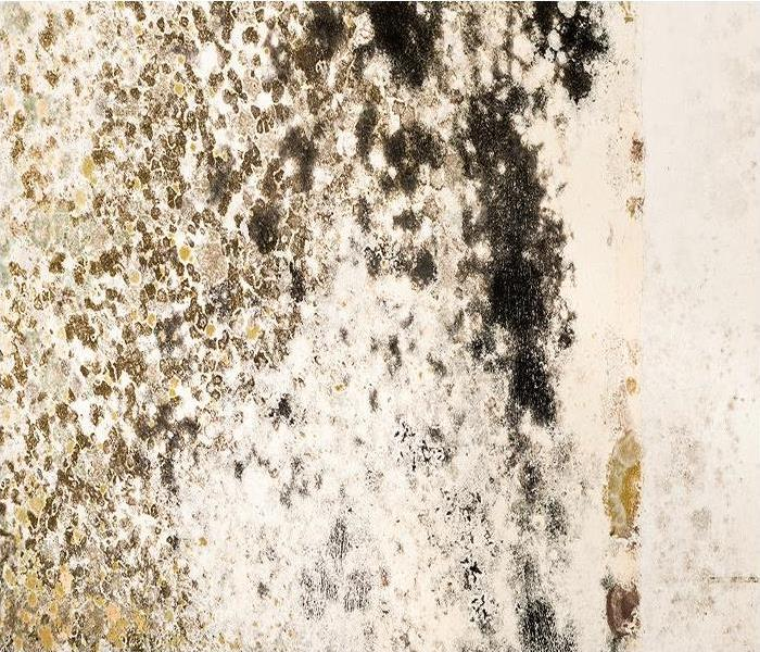 Mold Remediation Stopping Mold Damage in Tracy