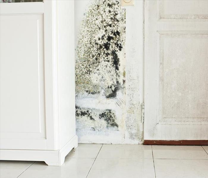 Mold Remediation The Truth About Performing Mold Damage Remediation Services On Your Own